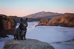 Chico, the resevoir & Mount Ascutney  12/52 (Boered) Tags: chico dog lake resevoir mountan snow ice frozen rock vermont springfieldresevoir mountascutney 52weeksfordogs