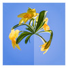 Petite planète printanière (sosivov) Tags: flower flowers frame squareformat square blue daffodil littleplanet photoshopelements yellow