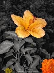 #flowerstagram #picoftheday #instablooms #floral #petals #photooftheday #plants #nature #flowerporn #insta_pick_blossom #flowersofinstagram #amazing #florals #flower #beautiful #prilaga #floweroftheday #spring #flowermagic #botanical #bloom #love #blossom (naveedzia82) Tags: photooftheday love naveedzia florals flowerporn prilaga flowermagic petals summer flowersofinstagram spring amazing beautiful petal instablooms botanical bloom plants flowerstylesgf floweroftheday floral flowers flowerstagram blossom nature instapickblossom flower flowerslovers blooms picoftheday naveedzia82