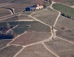 Barolo. Langhe, Piemonte (giuselogra) Tags: barolo uvebarolo langhe lamorra langa piedmont piemonte italy italia provinciagranda vitigni vigneti vine vino wine agricoltura agriculture