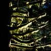 Forest Abstract (rich trinter photos) Tags: middleforksnoqualimieriver taylorriver quartzcreektrail forest tree lichen washington northwest naturalpattern abstract trinterphotos