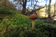 weich gebettet (Evan_1980) Tags: uckermark boitzenburg tiergarten strom wald herbst marone moos
