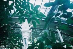 CNV000020 (skorska.a) Tags: copenhagen kbh analog analogphotography 35mm 35mmfilm zenit zenite botaniskhave