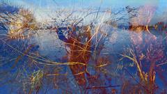 Bildschichten Am Fluss 27 Wieltsee (wos---art) Tags: bildschichten fluss river wasser water unterwasser underwater gestrüpp bäume baum verbrand ausgehöhlt rus äste ufer
