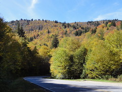 DSC07685 (TerrMys) Tags: northcarolina nc southern appalachians fall autumn october