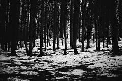 Winter forest (kotmariusz) Tags: forest trees woods nature 35mm filmphotography analog poland polska las monochrom bw monochrome black white olympusom40 ilfordxp2400 zuikoautos50mm