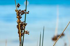 Riverside (.Stephen..Brennan.) Tags: bicton da70 foliage pentax pentaxk3 swanriver waterscape 70mm perth westernaustralia australia au