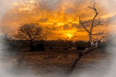 dead wood (PhilHydePhotos) Tags: africa safari sandriver selousgamereserve tanzania breathtakinglandscapes