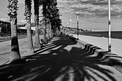 Passeig Marítim (Fnikos) Tags: street road sea water sidewalk shore seashore beach sky skyline cloud city mountain people tree palmtree shadow bench nature blackandwhite monochrome outdoor