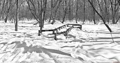 Domaine de Maizerets, Québec, Canada - 9957 (rivai56) Tags: domainedemaizerets québec canada 9957 maizerets quebeccity sigma ultragrandangle noiretblanc noir et blanc black white monochrome footbridge under snow passerelle