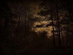 Sun Down (Bill Eiffert) Tags: sundown landscape textured trees nature color mood atmosphere pictorial pictorialism dark dusk