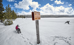 Beyond This Point (Musgrove and the Pumi) Tags: redfishlake northernshore sawtoothnationalforest idaho id sawtoothnationalrecreationarea dogbeach dogpark frozenlake snow cloudstrees mountains landscapehungarianpumidogbreed footsteps