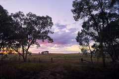 Yeoval (Bill Thoo) Tags: yeoval nsw newsouthwales australia rural bush farm landscape pastoral field sunrise travel trees scenic outdoors sony a7rii zeiss batis