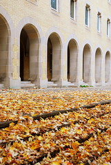 Days of Autumn (mandalaybus) Tags: toronto ontario canada autumn fall arch arches architecture universityoftoronto leaves colours colors