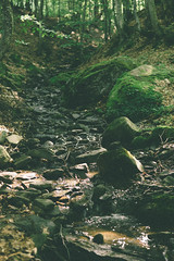 Flow is a life (Serbian Dictator) Tags: brook wood forest river carpathians mountain stones green stream sigma 3014 sony summerday hill