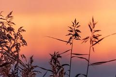 Soft Morning (NathalieSt) Tags: autresmotsclés camargue europe france gard languedocroussillon legrauduroi etang leverdesoleil nature nikon nikond750 nikonpassion nikonphotography sunrise