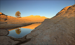 White pocket (jeanny mueller) Tags: usa southwest whitepocket paria kanab page coyotebuttes gsenm arizona rock water sunrise tree landscape vermilion cliffs