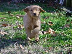 Running Pupper (r.nat.faust) Tags: dog mavica sony pupper