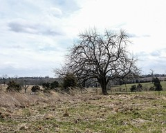 Tree, Perryville Battlefield 3/14/19 #civilwar #kentucky (Sharon Mollerus) Tags: cfptig19 civilwar kentucky