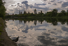 View of the Kremlin (Lyutik966) Tags: complex architecture palace mill river reflection sky bird pigeon nature tree moscow island water natureinfocusgroup soe