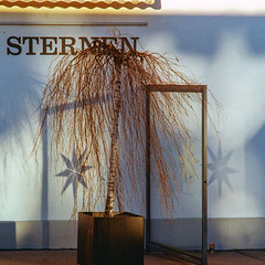 Sternen (Bephep2010) Tags: 2019 baum kodakgold minolta minoltamdtelerokkor135mm128 minoltax700 photoexif restaurant schweiz solothurn stars sterne switzerland winter x700 analog analogue tree wall wand kantonsolothurn ch