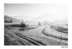 Cold winter morning (Aljaž Anžič Tuna) Tags: cold winter morning frost countryside nature tree panorama photo365 project365 onephotoaday onceaday 365 35mm 3 33 365challenge 365project nikkor nice naturallight nikon nikkor28mm nikond700 fog dailyphoto day d700 bw blackandwhite black white blackwhite beautiful