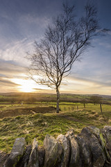 Tree at Beacon Hill (John__Hull) Tags: beacon hill tree sunset leicestershire charnwood forest woodland trust stone wall england uk woodhouse eaves nikon d7200 sigma 1020mm clouds sky fence fields landscape view