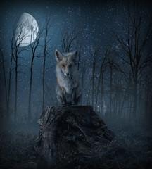 little friend rs-1 (P.E.T. shots) Tags: moon fox composite photoart creation