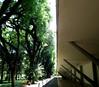 Museu Afro Brasil, Sao Paulo (blafond) Tags: saopaulo brésil brazil brasil architecture architektur museuafrobrasil ibirapuera musée museum museuminsaopaulo niemeyer oscarniemeyer manoeldanobregapavilion