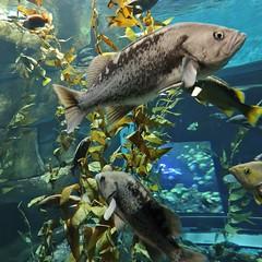 Fish (Will S.) Tags: fish mypics toronto ontario canada ripleysaquariumofcanada