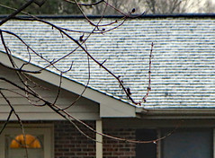 Snow On The Roof. (dccradio) Tags: lumberton nc northcarolina robesoncounty outdoor outside outdoors snow roof light doorway door brick building bricks window snowy winter tree trees sky cloudy overcast siding tuesday tuesdaymorning morning goodmorning treebranch branch branches treebranches bud budding treebuds canon powershot elph 520hs nature photooftheday photo365 project365