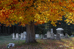 A Shady Resting Place_27A7392 (Alfred J. Lockwood Photography) Tags: alfredjlockwood travelphotography cemetary mapletrees shade tombstones autumn autumnalcolor autumncolor fallcolor fallfoliage vassalboro maine