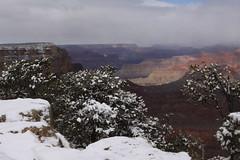 IMG_8601 (patterpix) Tags: grandcanyon arizona snow trees winter canyon storm