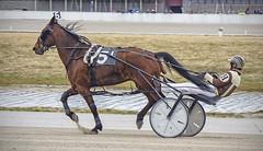Harness Racing (sjoblues) Tags: horse sulky racetrack harnessracing motion animal