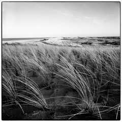 dune (look-book) Tags: niederlande texel 2k0604 hasselblad flexbody distagon 50mm