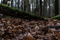January (michael_hamburg69) Tags: hamburg germany gehege niendorfergehege deutschland niendorf wood wald blätter laub winter waldboden leaves foliage