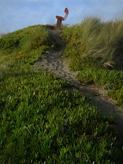 The Path to the Bench (Steve Taylor (Photography)) Tags: path digitalart seat bench green blue brown sand newzealand nz southisland canterbury christchurch northnewbrighton dunes succulent grass plant