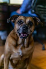 Doggo-2 (latinkidd98) Tags: a6000 sony sigma prime crop apsc dogs animals goodboy goodboi doggo dog portrait portraits headshot headshots photoshoot photoshoots