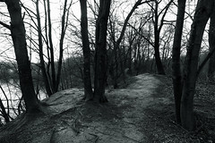 @walking path 3 (Amselchen) Tags: mono monochrome bnw blackandwhite trees path lake canon season earlyspring ef2470mmf4lisusm canoneos6dmarkii