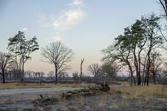 _IMG4386 (Hendricus M. de Regt) Tags: the netherlands gelderland natuur nature landscape grass bos forest trees zonsopkomst sunset swamp nederland veluwe landschap gras water bomen moeras
