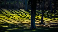 Österreich / Austria: Triestingtal (CBrug) Tags: gras baum tree grass niederösterreich schatten shade rasen lawn grün licht light triestingtal hirtenberg enzesfeld stveitandertriesting linien lines