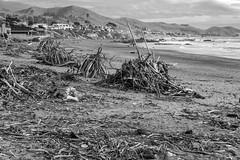 Wood Strewn _ bw (Joe Josephs: 3,166,284 views - thank you) Tags: beach californiabeach coastal nature naturephotograph landscape landscapephotography travel travelphotography seashore pacificocean westcoast bw monochrome blackandwhite