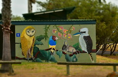 Creatures of the Wide Bay [Bundaberg Australia] (Dreaming of the Sea) Tags: tamronsp2470mmf28divcusd nikond7200 art birds animal trees greenleaves greengrass greysky palmtrees fence owl kookaburra mouse flowers innespark bundaberg queensland australia wc pc sheoak fantasticmonday