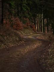 PGH56318 (klangcharakter) Tags: groserfeldberg oberems zacken hessen taunus weg wegverlauf feldweg wald bäume baum natur nature panasonic gh5 mft lumix iso200 11000sek samyang 85mm f14 luminar3