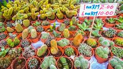 DSC_4568 (inkid) Tags: travel visit cactus plant tanah rata camera highlands pahang malaysia