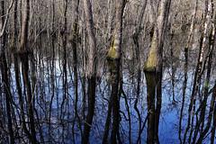 Wetland (Ciceruacchio) Tags: wetland terreshumides tree arbres alberi water eau acqua refexion reflection riflessi nature natura nikond750
