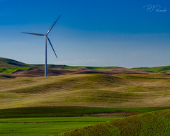 Windmill III (Perry J. Resnick) Tags: 2017 pjresnick palousewa perryjresnick pjresnickgmailcom pjresnickphotographygmailcom ©2017pjresnick ©pjresnick 56mm fujinon56mmf12 56mmf12 nature light fuji fujifilm atmosphere atmospheric digital shadow texture shadows yellow angle perspective white xf fujinon resnick outdoor green brown orange rectangle rectangular color colour sky clouds blue xpro2 fujifilmxpro2 grass drama windmill field evening sundown velvia fujifilmvelvia 4x5 sunset