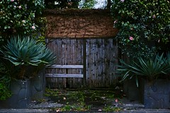 an old house gate (avawoodworth) Tags: tokyo house japan rain rainy gate plant nature snapshot snap old sigma dp dpquattro 45mm field