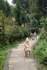 High speed hiking dogs (theq629) Tags: animal dog taiwan taipei yangmingshan hiking