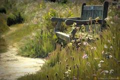 Trailside Rest Stop (Romair) Tags: sliderssunday topazstudiocreations cortemaderamarsh rogerjohnson